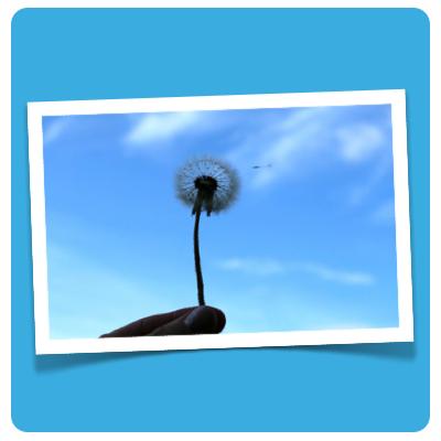 dandelion :: doschu