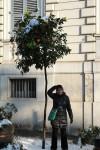 Orangenbaum mit Schnee in Rom :: Foto: DoSchu.Com