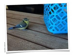 Zwitscher Vogel