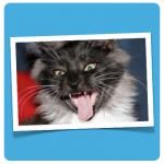 fauchende Katze illustration cat content