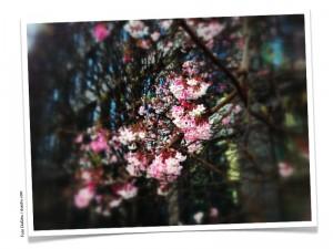 Blüten Foto: DoSchu
